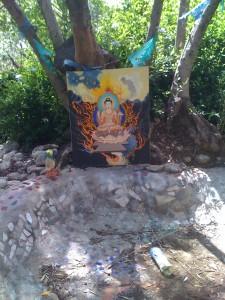 para Buddha