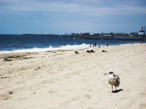 beach_blog