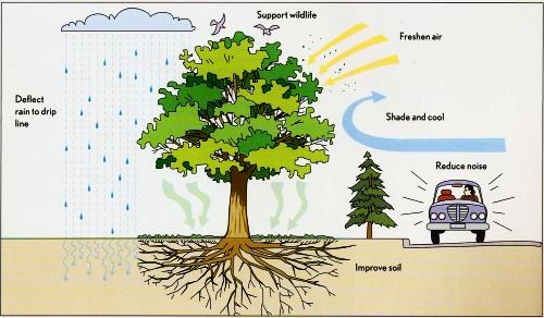 trees1_blog